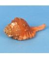 Strand thema deco schelp 8 cm