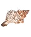 Decoratie schelp trapezium 14 cm