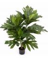 Kunst broodboom artocarpus altilis