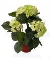 Lichtgroene hortensia kunstplant 36 cm