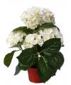 Witte hortensia kunstplant 36 cm