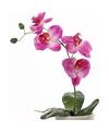 Roze Phalaenopsis nep plant