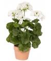 Kunstplant witte Geranium 35 cm